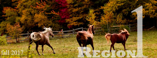 horses with autumn trees