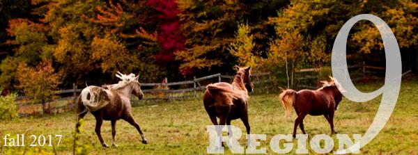 horses in autumn field