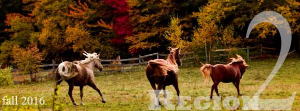 horses in autum field