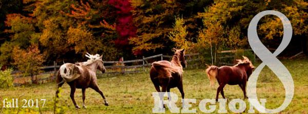 horses in autumn trees