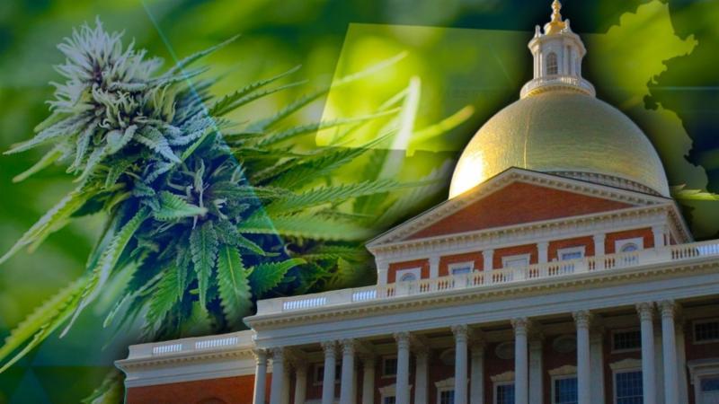 What the mob boss hid under his marijuana grow