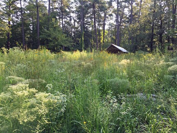 Prairie in late August