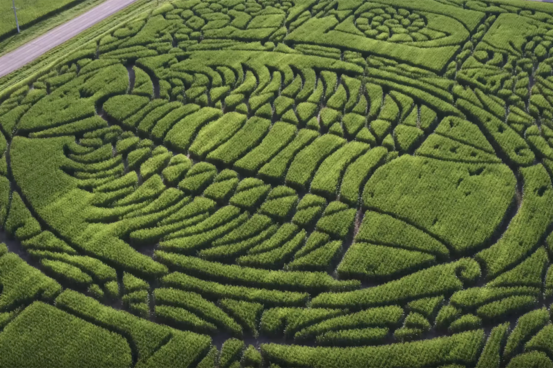 Aerial view of the Treinen Corn Maze trilobite