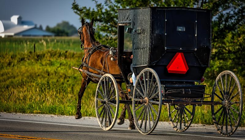 Amish horsedrawn buggy