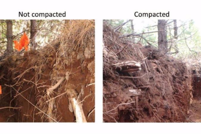 Comparison of not compacted and compacted soil