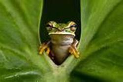 frgo looking thru leaf