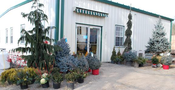 Entrance with container evergreens