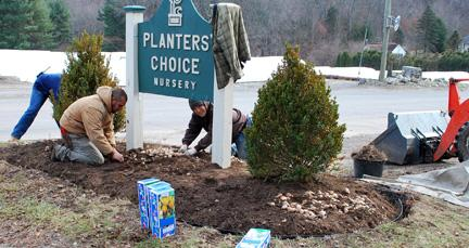 Planting bulbs near the sign