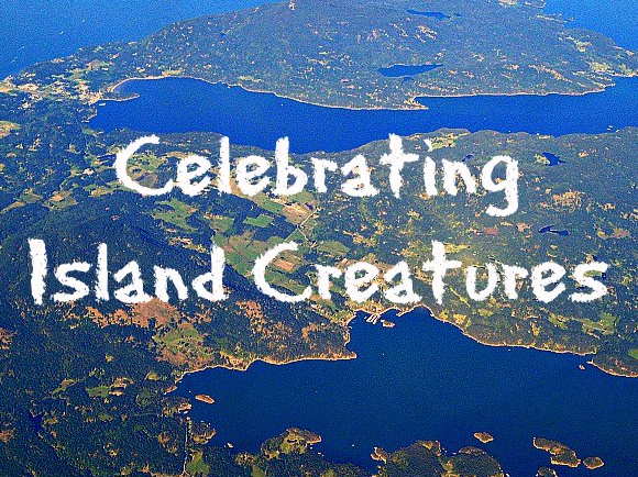 Celebrating Island Creatures pic