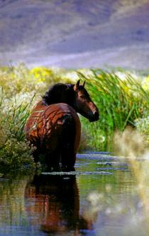 Hidden Valley Wild Horse Image
