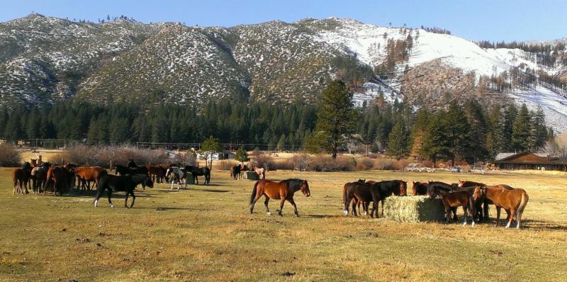 Thanksgiving Day 2016 in Washoe Valley - feeding big bales to awesome horses!!!