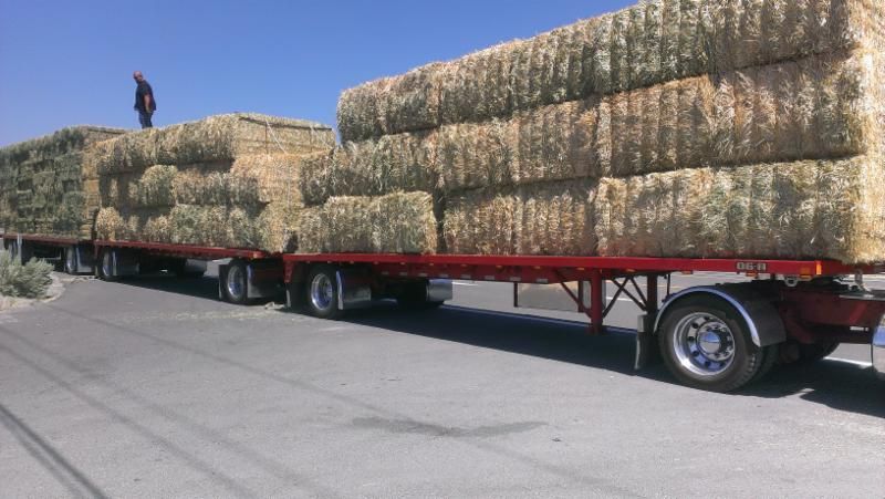 Big bales of hay for our rescued horses!!