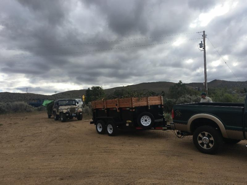 Vehicles carrying woody vegetation lined up at the Junk the Juniper event at the Nevada Division of Forestry.