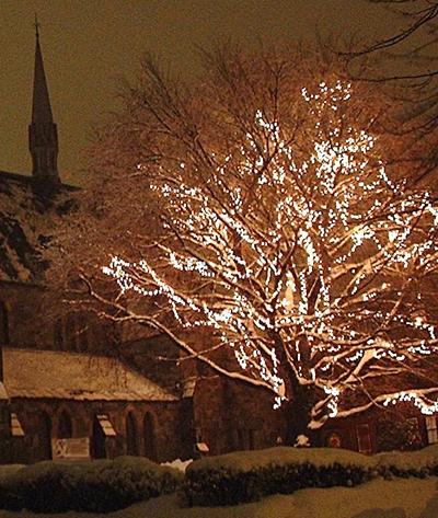 lit tree