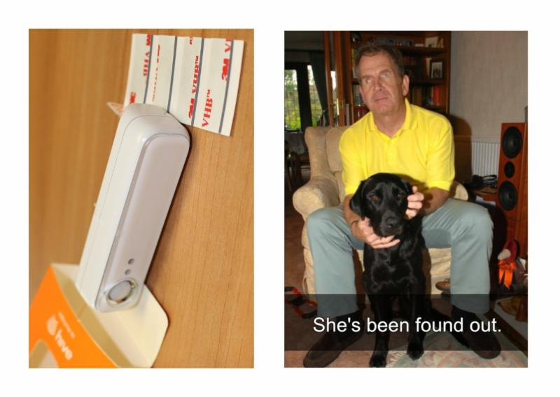Hive sensor and guide dog