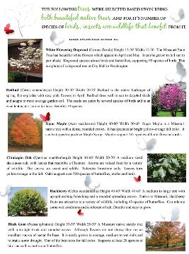 City of Washington Beautification Project 2016 tree varieties