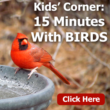 Title block with a picture of a cardinal bird on a birdbath - Kids' Corner- 15 Minutes With Birds