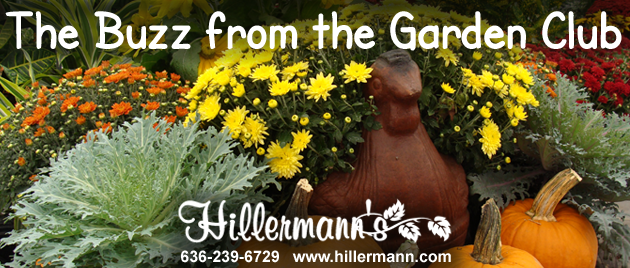 Picture with fall plants and pumpkins available at Hillermann Nursery and Florist with the store logo and contact information