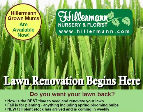 Lawn Renovation Begins Here! Photo of grass and lawn information - Hillermann Nursery and Florist