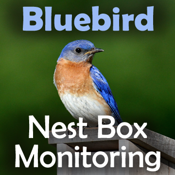 Picture of a bluebird with text - Bluebird Nest Box Monitoring