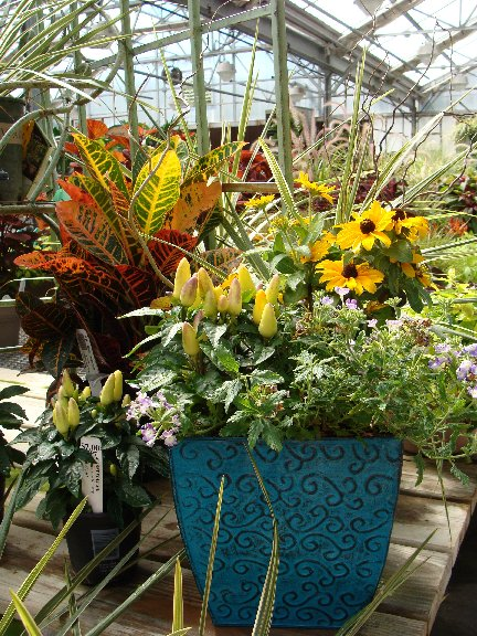 Container garden and plants available at Hillermann Nursery and Florist
