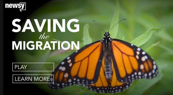 Image of Saving the Migration documentary on Newsy.com