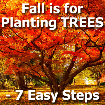 Fall is for Planting Trees - 7 Easy Steps - title graphic with a pretty fall tree picture