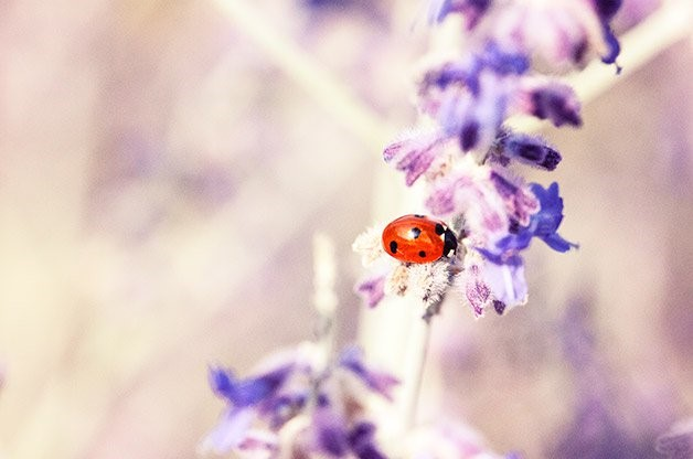 Ladybug picture from Birds and Blooms newsletter - birdsandblooms.com