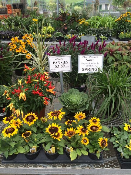 Fall annual plants available at Hillermann Nursery and Florist