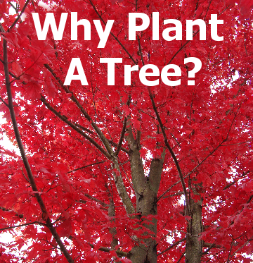 Why Plant a Tree - title block with a picture of a tree with pretty fall color