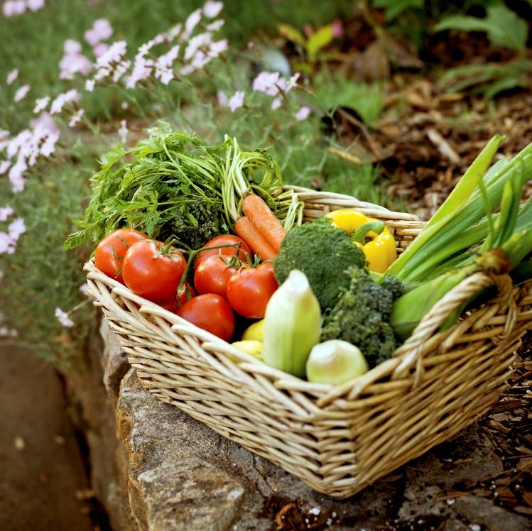 Fresh garden vegetables in a basket