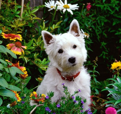 Dog in a home flower garden