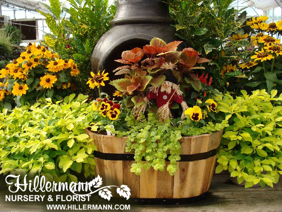 Display with fall plants available at Hillermann Nursery and Florist