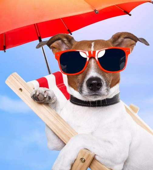 Picture of a dog in a lounge chair with sunglasses and an umbrella