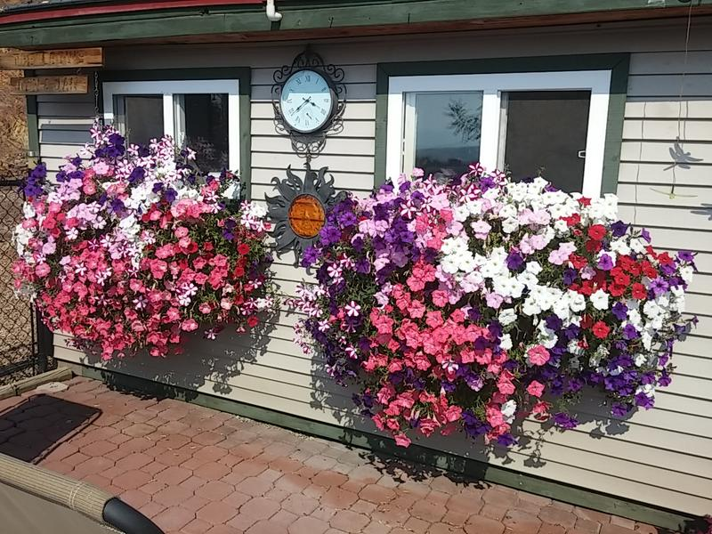 Best Flowering Planter - Public Vote