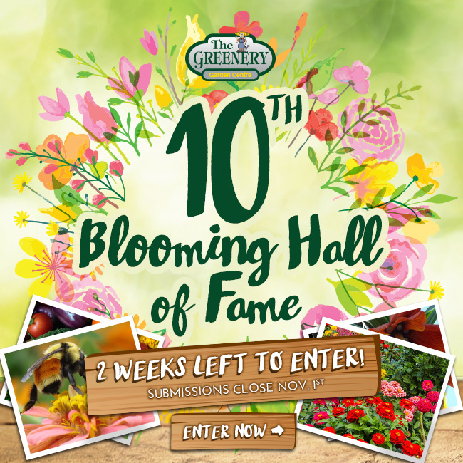 Blooming Hall of Fame 2016 Enter