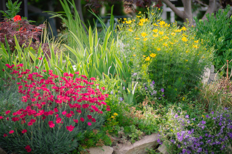 Best Perennial Garden - Staff Vote