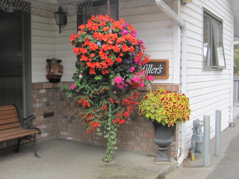 Best Flowering Hanging Basket - Staff Vote