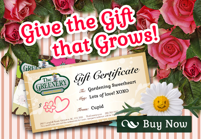Valentine_s Day Greenery Gift Certificates