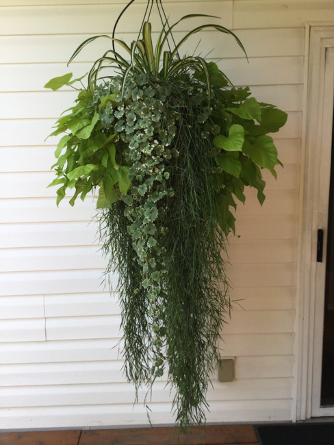 Best Foliage Planter or Foliage Hanging Basket