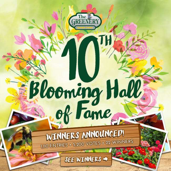 10th Blooming Hall of Fame 2016 Photo Contest Winners