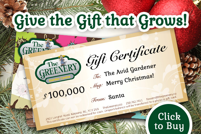 Greenery Gift Certificates