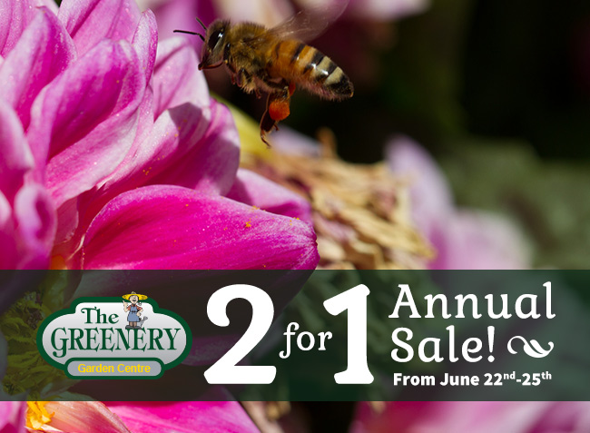 Greenery_s Annual 2 for 1 Sale