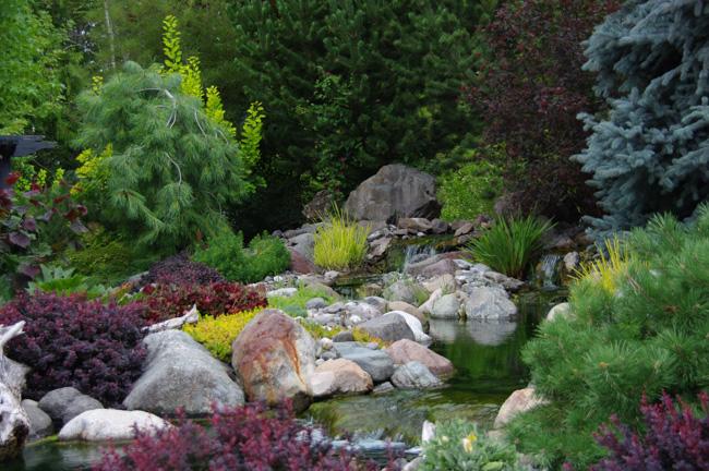 Best Water Garden