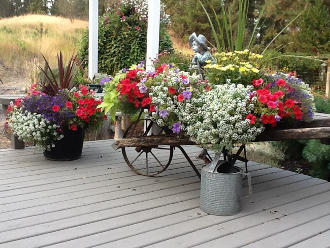 Best Flowering Planter