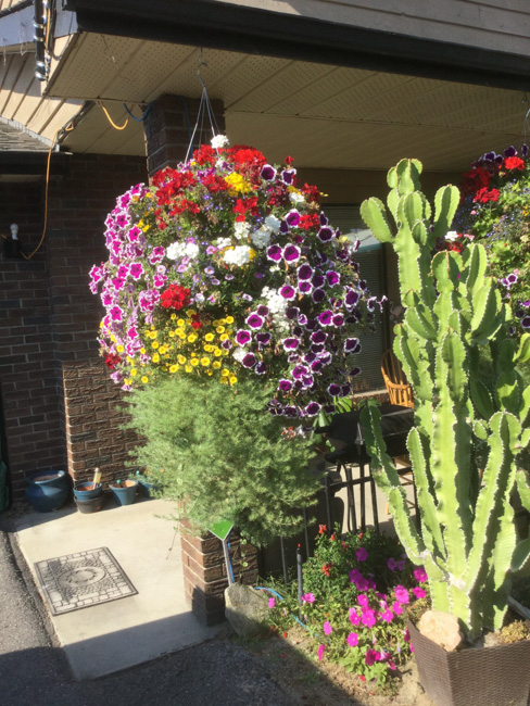 Best Flowering Hanging Basket