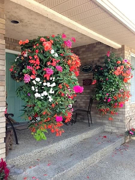 Best Hanging Basket - Public Vote