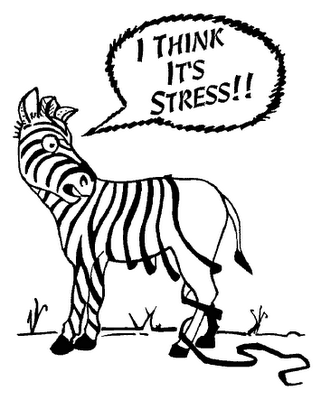 a zebra so stressed about life that he is losing his stripes