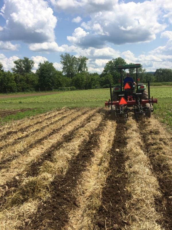 tractor, field, row