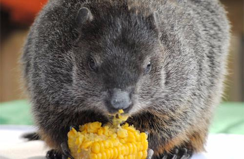 VLM groundhog
